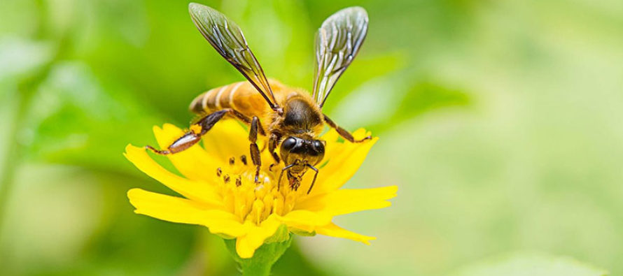 Disminución de insectos está provocando desequilibrio ecológico del planeta