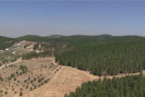 JNF: Siembra un árbol en Israel