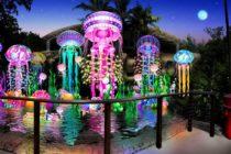 Jungle Island presentará show de luces led «Luminosa»