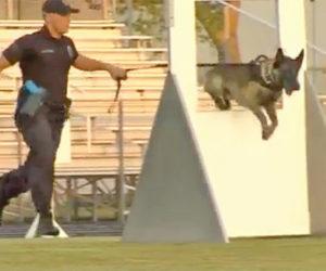 Competencia de unidad canina K9 hoy en Boynton Beach High School