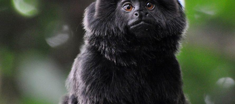 Autoridades lograron recuperar al pequeño mono que había sido robado del zoológico de Florida