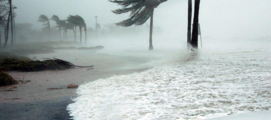 ¡A ponerse cascos! El frío en Florida puede hacer que caigan iguanas congeladas de los árboles