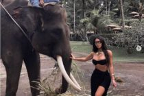 Kim Kardashian secuestra la trompa del elefante en Instagram