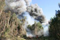 Incendio en los Everglades consumió más de 15.000 acres