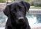 Solo en Florida: Perro puso un auto en reversa y lo condujo en círculos… ¡durante una hora! (+videos)