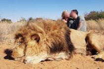 ¡Indignante! Pareja de cazadores matan a un león durmiendo y celebran dándose un beso