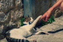 Por esta razón los arañazos de gato pueden causar disfunción eréctil