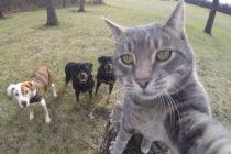 Un gato causa furor en las redes sociales por sus increíbles selfies