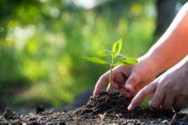Profesor de la FIU lidera transformación de parque en jardín comunitario en Brownsville