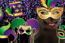 Mardi Gras en Miami… Las mejores opciones para celebrar esta fiesta imperdible