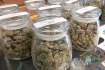 Partidarios de marihuana recreativa responden a objeciones de Fiscalía, Cámara y Senado de Florida