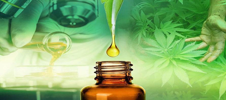 Industria del cannabis seduce a mujeres emprendedoras en Florida