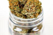 Florida da pasos agigantados en el mercado de la marihuana medicinal