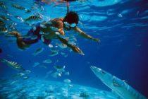 El nivel del mar aumentará 20 centímetros debido a las emisiones de carbono