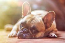 Miami-Dade Animal Services no cobrará tarifa de adopción en campaña de adopción de mascotas en días festivos