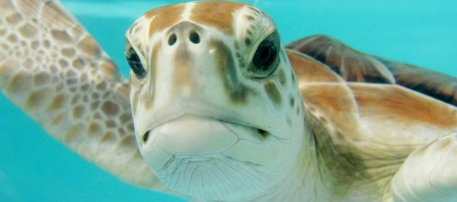 Mujer que atacó un nido de tortugas marinas en Miami Beach se encuentra en espera de juicio