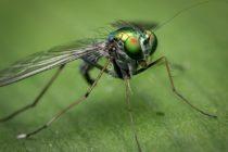Ordenan cierre de diversos restaurantes del sur de Florida por presencia de moscas