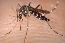 Reportan dos nuevos casos de dengue en Florida