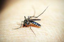 Casos de malaria en la República Dominicana han incrementado un 68%