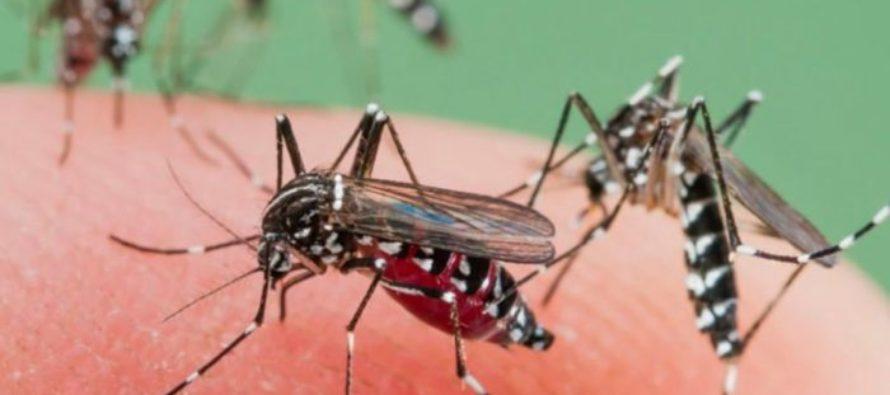 ¡A tomar previsiones! Miami entre las 10 ciudades con más problemas de mosquitos