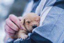 ¡Entérese! Las personas que afirman falsamente la necesidad de una mascota de apoyo emocional serán multados con $500