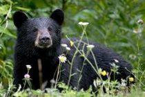 Video de un oso que sorprendió a una mujer al acariciar su cabello