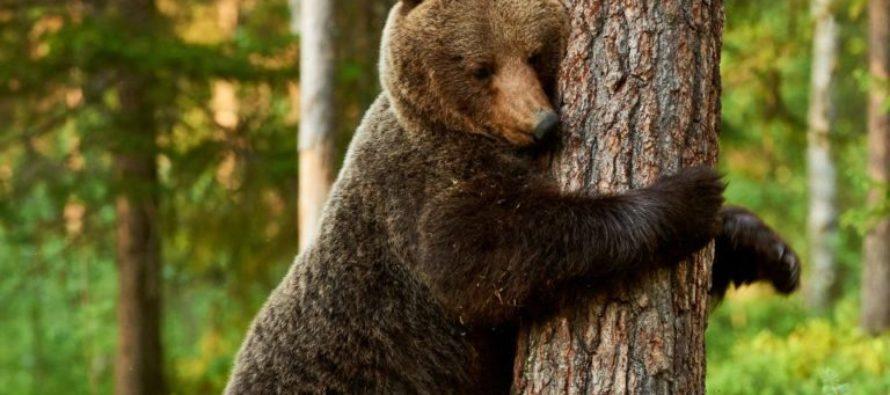 ¡Pendientes! Residentes del suroeste de Florida en alerta por presencia de osos