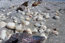 Más de 17,000 ostras fueron robadas de la bahía de Pensacola, en Florida