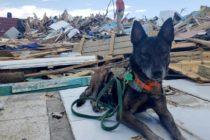 Más de cien perros y gatos provenientes de Bahamas arribaron a la Florida