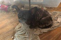 Rescataron 3 niños y 245 animales de una vivienda en condiciones deplorables en Florida