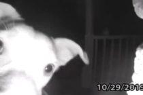 ¡Inteligente! Perro tocó el timbre de su casa porque sus dueños lo dejaron en la calle (Video)