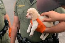 ¡Cómplice peludo! Detuvieron a hombre y su perro por robo en Florida