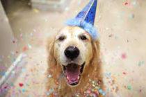 Descubre cómo calcular la «edad humana» de tu perro