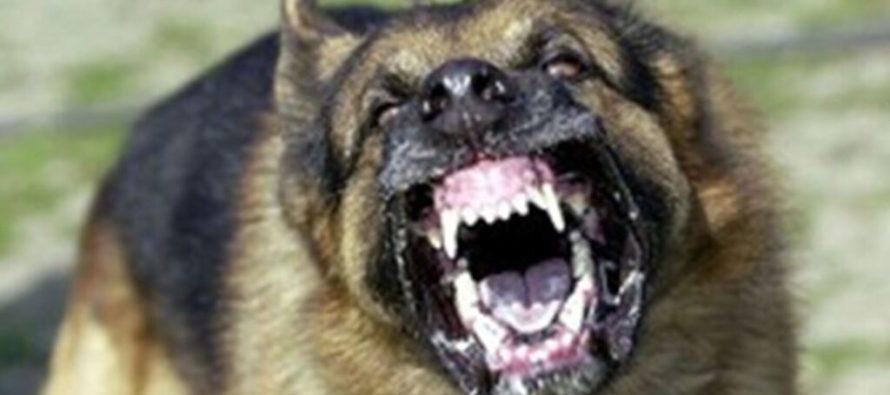 Niño de dos años fue mordido en la cara por un perro en Florida