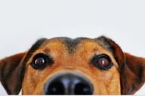 Hallan perro pintado de verde llorando y buscando comida en la basura (Fotos)