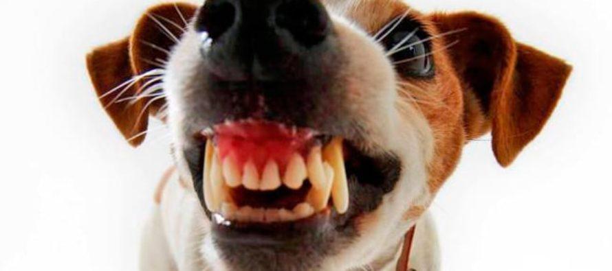 Nunca has visto un ataque más desigual entre dos animales con colmillos (VIDEO)