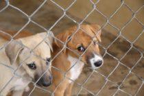 Reclusos de Brevard acariciarán perros en refugio este 4 de julio