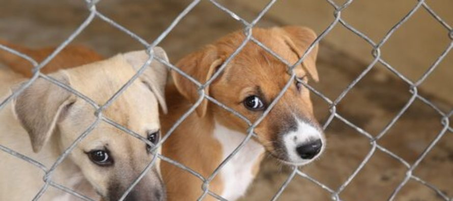Proteccionistas de animales rescataron a un grupo de perros que serían sometidos a Zoonosis