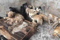 Perros rescatados en China que iban a ser parte de un festín están en Florida