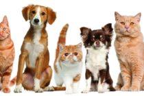 ¡Contra el abuso! Ordenanza prohibirá el alquiler de mascotas