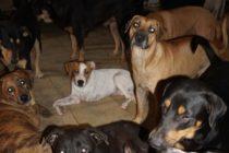 Una mujer se hacía llamar protectora de animales pero asesinó a casi 500 perros y gatos en España