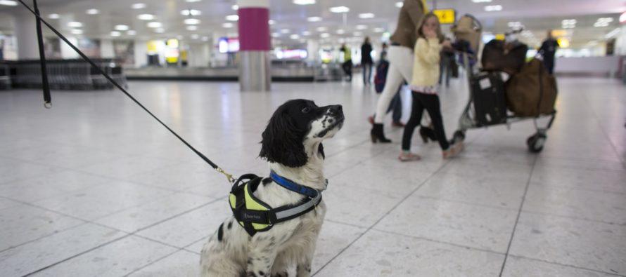 Los 10 mejores aeropuertos que admiten mascotas en EEUU… menos Florida