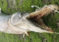 Horrible criatura mitad pez mitad cocodrilo fue encontrada en un lago de Luisiana