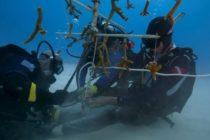 «100 Yardas de Esperanza»: El arrecife coralino que plantarán en Florida