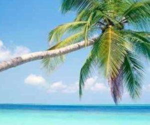 Pronostican clima soleado para Orlando el fin de semana