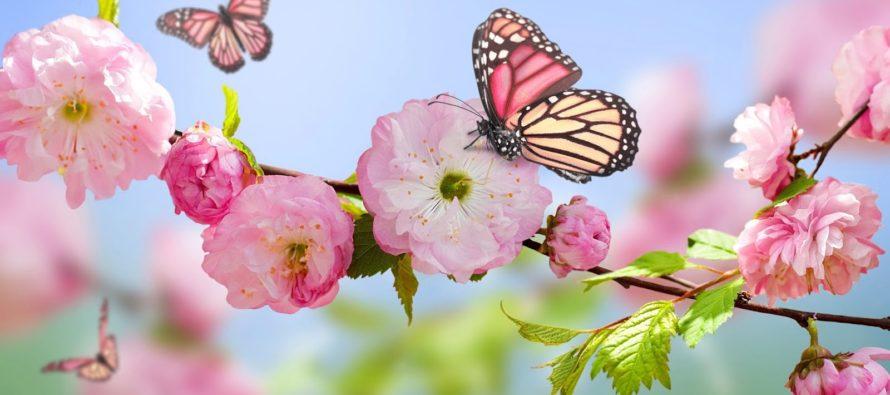 Llegó la primavera: ¿por qué este año es el 20 de marzo en vez del 21?
