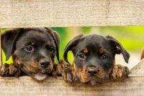 Buscan familias que adopten perros y gatos trasladados al sur de Florida tras impacto de Dorian
