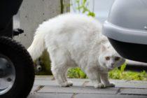 Viral: Olvidó cerrar la ventana del coche, lo encontró repleto de gatos y se desató la locura +Vídeo