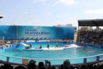 Entrada gratuita para maestros este fin de semana en el Miami Seaquarium