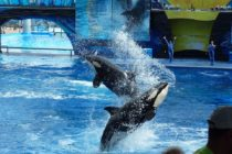 Piden investigar los espectáculos de delfines de SeaWorld por presunto maltrato